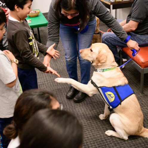 Service dog meeting young children
